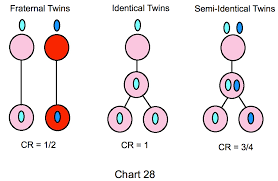 Types Of Twins Chart Deep Fried Hoodsie Cups Just Another Wordpress Com Site