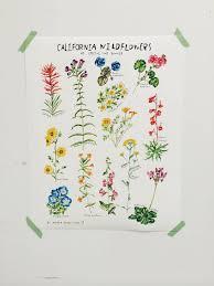 Botanical Chart Print Favorite Botanical Illustrations Our 10 Best Sources For