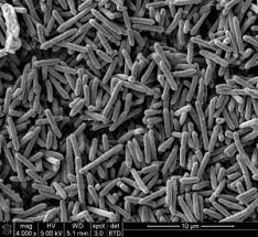 Microscopy Scanning Electron Microscopy Campus Microscopy