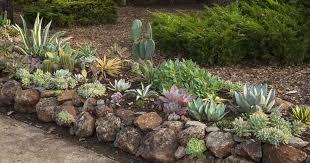 how to grow succulent plants in the garden