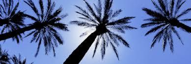 Palm Tree Tumblr Header nornasinfo