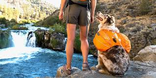 11 best dog backpacks for hiking and camping 2018 small backpacks for dogs