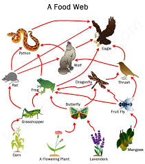 desert ecosystem food chain diagram new web coloring sheet
