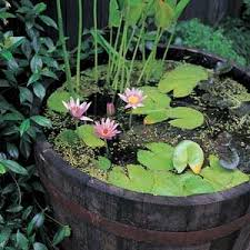 Small Picture The 25 best Container water gardens ideas on Pinterest Diy