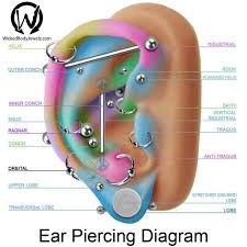Chart Of Ear Piercings Ear Piercing Pain Chart Septum Piercing