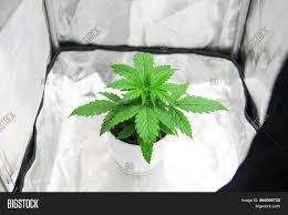 Indoor Grow Box With Lights Marijuana Grow Box Image Photo Free Trial Bigstock