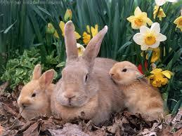 """Résultat de recherche d'images pour """"pâques"""""""