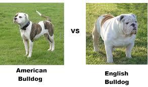 pitbull dog vs bulldog. Modren Dog Two Very Very Different Breeds Of Dogs For Pitbull Dog Vs Bulldog R