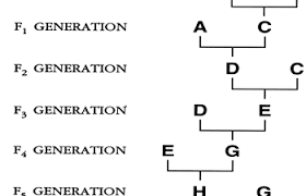 Poultry Genetics Egg Color Feathering Inbreeding Etc