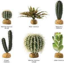 desert plants with names. Simple Names The Desert Plants Intended Desert Plants With Names L