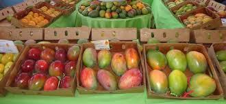 Resultado de imagen para fotos de camiones llenos de mango en santiago rodriguez