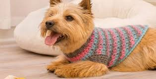 Crochet Dog Pattern Extraordinary Sporty Style Crochet Dog Sweater [FREE Crochet Pattern]