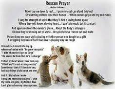 animal rescue quotes and sayings. 92 Best Quotes About Rescue Dogs Images On Pinterest In 2018 Animal And Sayings