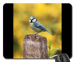 Small Blue Printer Garden Amazon Com Mouse Pads Blue Tit Garden Bird Bird Small