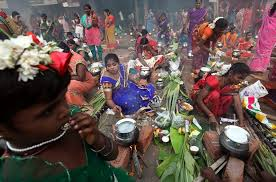 pongal tamil harvest festivals customs traditions  pongal 2017 pongal 2017 date pongal festival pongal in tamil nadu