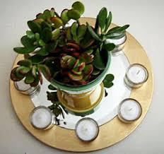 office feng shui plants. Jade Plant Feng Shui Office Plants F