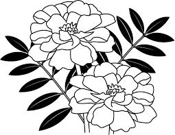 夏の花2 19 マリーゴールド 花の無料イラスト素材 イラストポップ