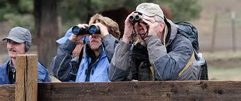Image result for Bird watchers