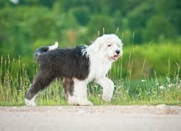 Dog Lymph Node Location Chart Lymph Node Inflammation Lymphadenopathy In Dogs