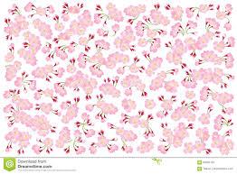 Cherry Blossom Backdrop Full Bloom Pink Sakura Tree Cherry Blossom Isolated On White