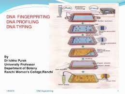 How To Read A Dna Fingerprint Chart Dna Fingerprinting 7 Jan 2015