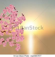 Cherry Blossom Backdrop Japanese Sakura A Branch Of Dark Pink Cherry Blossom Against The Backdrop Of A Beautiful Sunset Illustration
