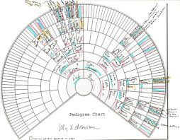 X Dna Fan Chart Using X And Mitochondrial Dna Charts By Charting Companion