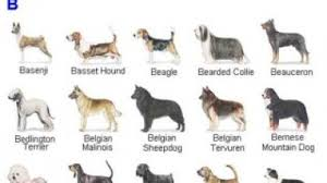 terms akc list of dog breeds all dog breeds name list dog breeds image