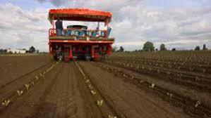 Our ferrari transplanters are perfect for organic farming and hemp farming as well. Vegetable Transplanter Futura Ferrari Costruzioni Meccaniche S R L Lettuce Tomato Automatic