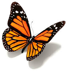 Image result for butterfly
