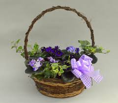 african violet basket in utica ny chester s flower and greenhouses