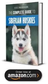 siberian husky puppies in