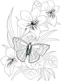 Butterfly And Flower Coloring Pages Butterfly Coloring Pages Free