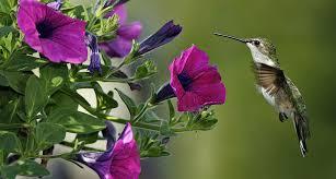 hummingbird garden. Plain Garden Hummingbird Garden Intended N