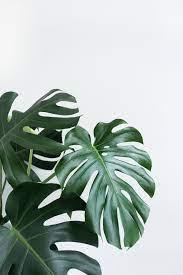 Minimalist Plant Wallpapers - Top Free ...
