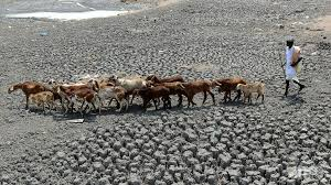 Image result for India drought: '330 million people affected'