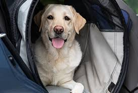 The day after you enroll your pet(s) with as the mask and/or respirator is being used for prevention and are not considered medically necessary for animals per the american veterinary medical. 1 Rated Dog Puppy Insurance Plan Healthy Paws