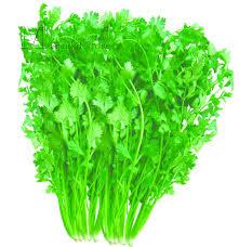 Kitchen Garden Seeds Popular Kitchen Garden Buy Cheap Kitchen Garden Lots From China