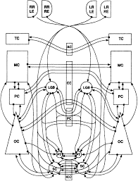 Wiring diagram of known connections in mammalian brain that could