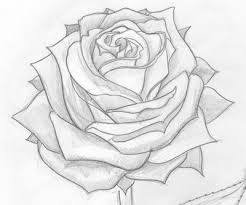 Gallery Roses Drawn In Pencil Drawings Art Sketch