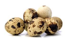 خریدار تخم مرغ محلی و تخم بلدرچین بصورت عمده ای و دائمی
