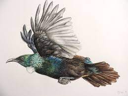 Shari Hawkins - Bird artist. Another version of the Flying Tui - WildLight  Photography