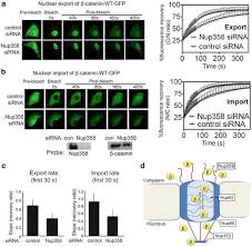 wnt signaling proteins associate with the nuclear pore complex  open image in new window