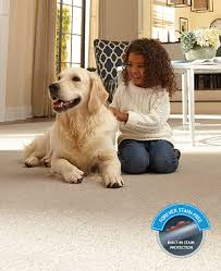 Small Picture Pet Friendly Carpet Best Carpet for Pets Pet Owners Mohawk