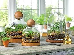 terrarium containers ikea terrarium questions