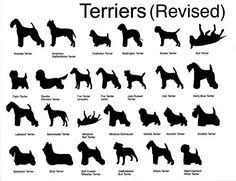 Rat Terrier Size Chart 35 Best Dogs Images Dogs Pets English Bull Terriers
