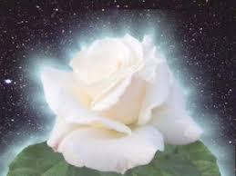 Resultado de imagen de rosas con Luz