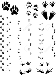 Paw Prints And Tracks Of Five Different Animals Top Row Left