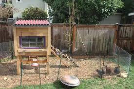 Raising Backyard Chickens For Dummies  Modern FarmerHow To Keep Backyard Chickens