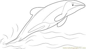 Small Picture Jumping Hector Dolphin Coloring Page Free Dolphin Coloring Pages